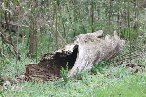 Hollowed out Log