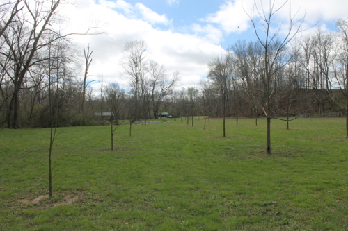 Steve's Beloved Pecan Grove